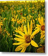 Sunflower Storm Metal Print