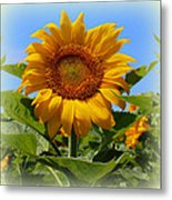 Sunflower Sunshine Metal Print