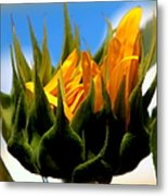 Sunflower Teardrop Metal Print