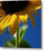 Sunflower Three Metal Print
