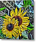 Sunflower Under The Gables Too Metal Print
