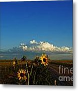 Sunflower Views Metal Print