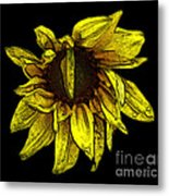 Sunflower With Contours Effect Metal Print