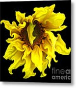Sunflower With Curlicues Effect Metal Print