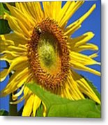 Sunflower With Honeybee Metal Print