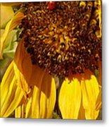 Sunflower With Ladybug Metal Print