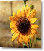 Sunflower With Texture Metal Print