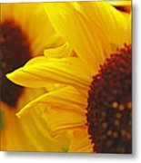 Sunflower Yellow Metal Print