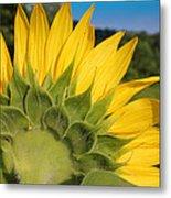 Sunflower1253 Metal Print