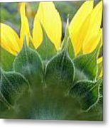 Sunflower1261 Square Metal Print