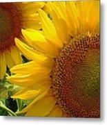 Sunflowers #1 Metal Print
