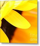 Sunflowers 2 Metal Print