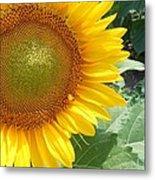 Sunflowers #2 Metal Print