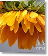 Sunflowers 6 Metal Print
