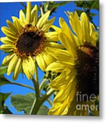 Sunflowers Abound Metal Print