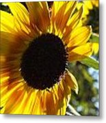 Sunflowers Alive And Free Metal Print