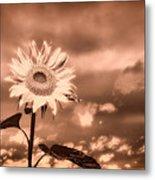 Sunflowers Metal Print by Bob Orsillo