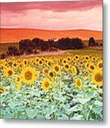 Sunflowers, Corbada, Spain Metal Print
