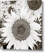 Sunflowers In Back And White Metal Print