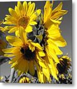 Yellow Selected Sunflowers Metal Print