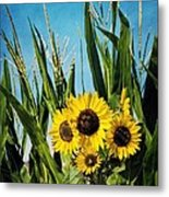 Sunflowers In The Corn Field Metal Print