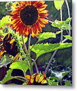 Sunflowers In The Park Metal Print
