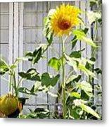 Sunflowers In The Window Metal Print