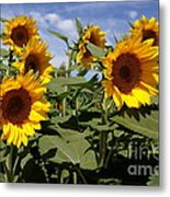 Sunflowers Metal Print by Kerri Mortenson