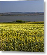 Sunflowers Near The Sea Metal Print