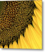 Sunflowers Of Summer Metal Print