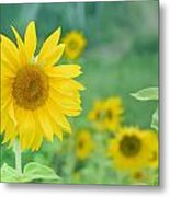Sunflowers Vintage Dreams Metal Print