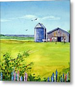 Sunkissed And Windblown Lupines And Laundry In Pei Metal Print
