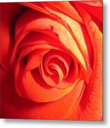 Sunkissed Orange Rose 11 Metal Print