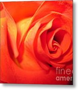 Sunkissed Orange Rose 6 Metal Print