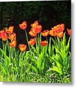 Sunkissed Tulip Garden Metal Print