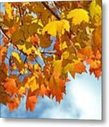 Sunlight And Shadow - Autumn Leaves Two Metal Print