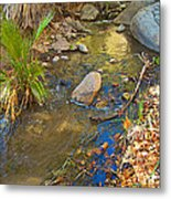 Sunlight On Andreas Creek In Indian Canyons-ca Metal Print