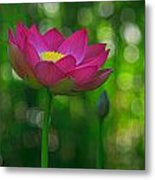 Sunlight On Lotus Flower Metal Print