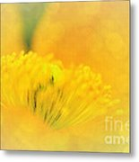 Sunlight On Poppy Abstract Metal Print