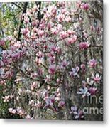 Sunlight On Saucer Magnolias Metal Print