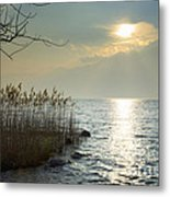 Sunlight On The Lake With Pampas Grass Metal Print