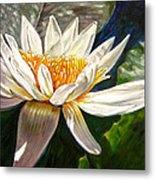 Sunlight On White Lily Metal Print
