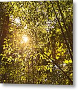 Sunlight Shining Through A Forest Canopy Metal Print