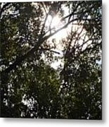 Sunlight Through Branches I Metal Print
