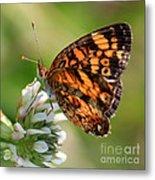 Sunlight Through Butterfly Wings Metal Print