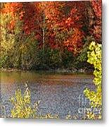Sunlit Autumn Metal Print