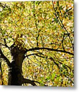 Sunlit Autumn Tree Metal Print by Natalie Kinnear