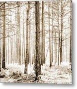 Sunlit Hazy Trees In Neutral Colors Metal Print