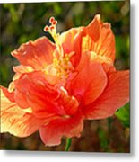 Sunlit Hibiscus Metal Print