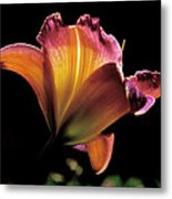 Sunlit Lily Metal Print by Rona Black